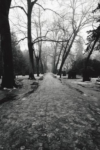Bare Tree The Way Forward Graveyard Path Fog Peaceful Foggy Morning Black And White Photography Gravestone Wintertime