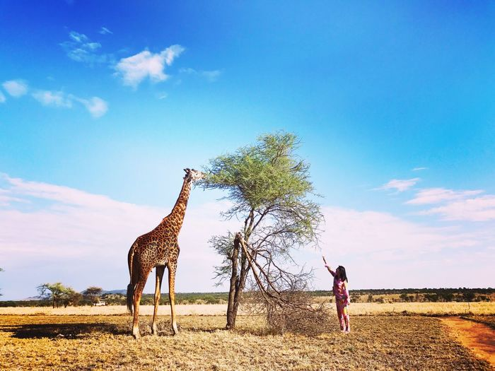 EyeEmNewHere Giraffe One Animal Outdoors Animal Themes Tranquility Enjoying Life Morning Walk Morning View Giraffe Life Outside The Tent Tentlife Unforgettable Moment Unforgettable ♥