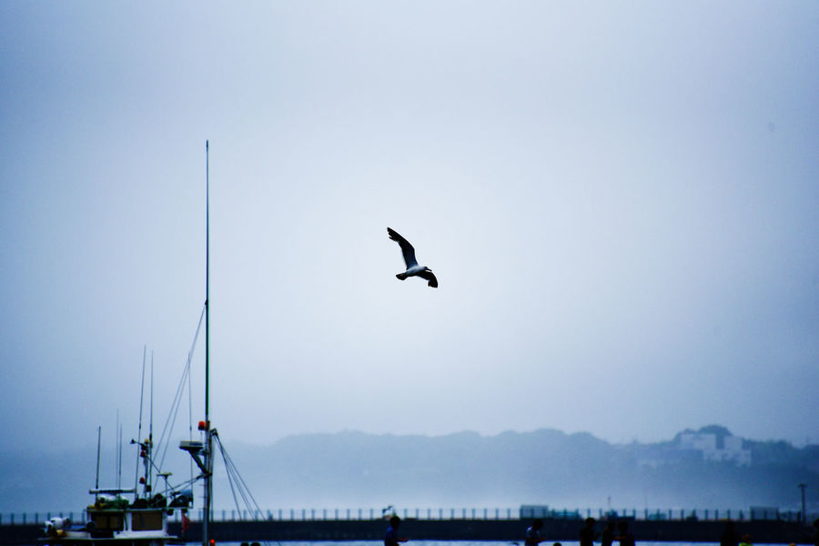 Seagull Silhouette Seaside View Harbor Aloof EyeEm Gallery Beard Flying Nature Capture The Moment Taking Pictures Getting Inspired