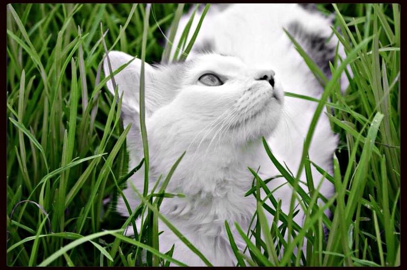 The EyeEm Facebook Cover Challenge Cats Nature Green