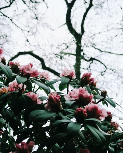 Rhododendron Flower Beauty In Nature Blossom Nature Springtime Pink Color No People Low Angle View Fragility Tree Branch Botany Sprinflowersinbloom Garden Flower Silence Speaks Garden Love Garden_world Eyem Gardens Eyemcaptured Eyemflowers Eyemphotography Eyemflowerlover Close-up Eyemphoto