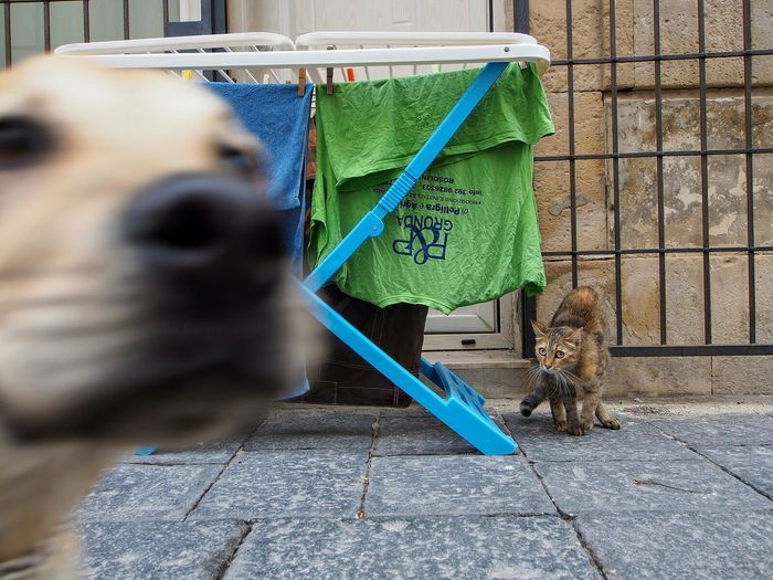 Photobomb Cat Dog Sicily Italy Siracusa
