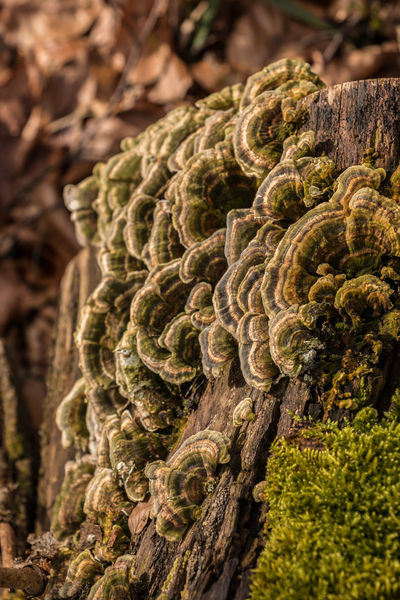Mushrooms on a tree trunk in the middle of the forest Mushrooms Bark Beauty In Nature Close-up Day Focus On Foreground Green Color Growth Moss Mushroom Natural Pattern Nature No People Outdoors Pattern Plant Selective Focus Textured  Tree Tree Trunk Trunk Vegetable Wood - Material