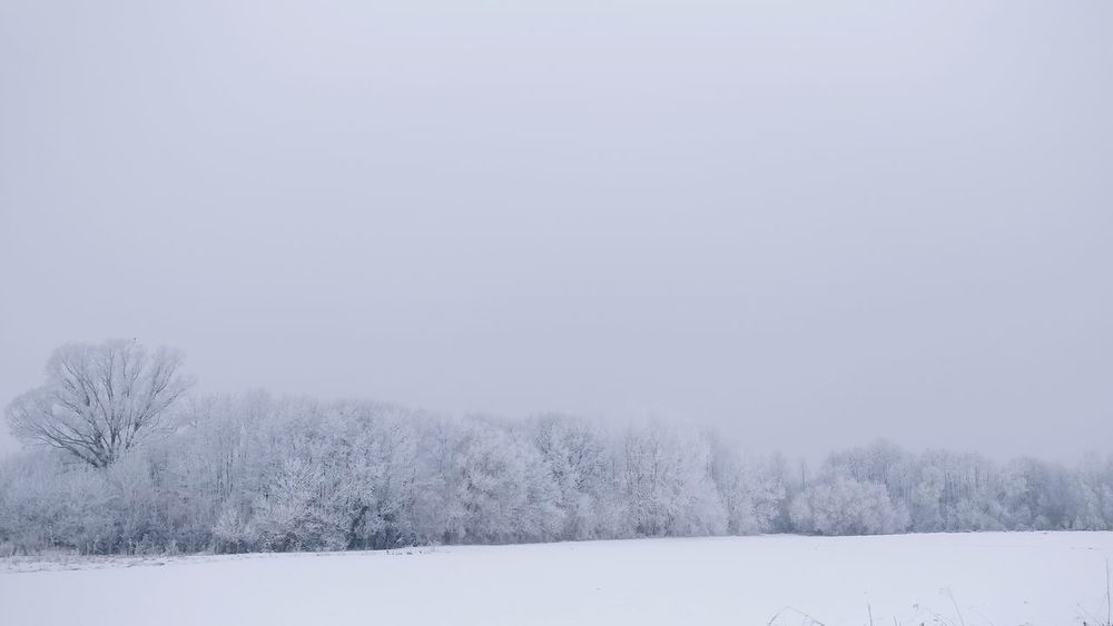 Effects of long lasting winter and bellow zero temperatures for more than 5 weeks, from -5°C to -20°C First Eyeem Photo Oneplus3T Oneplus3tphotography Winter Snow Hoar