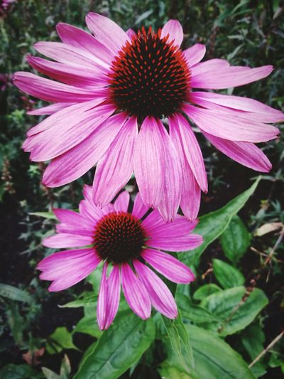 Flower Eastern