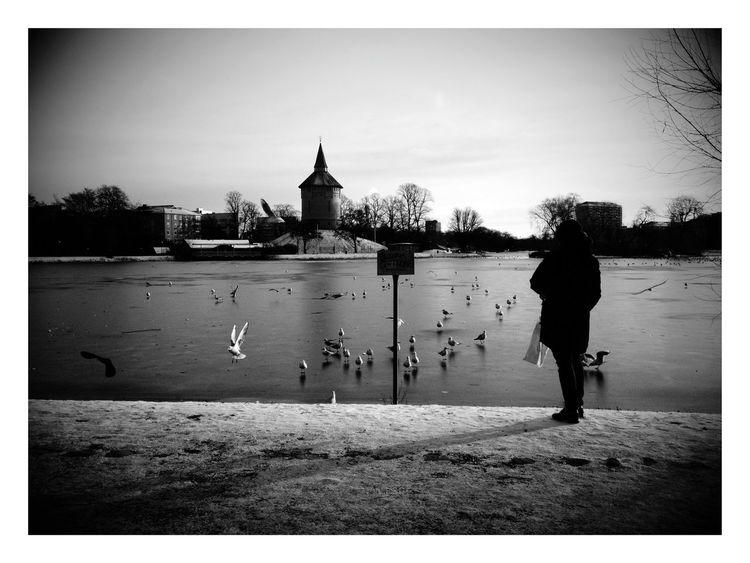 Winter January 2015