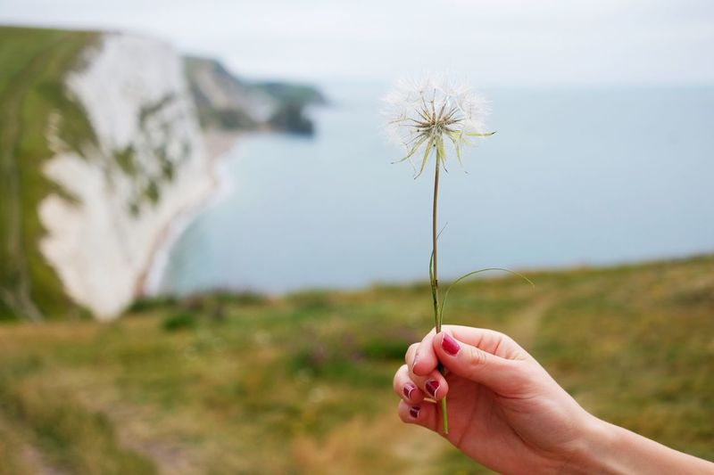 Cropped Hand Of Woman Holding Dandelion On Hill
