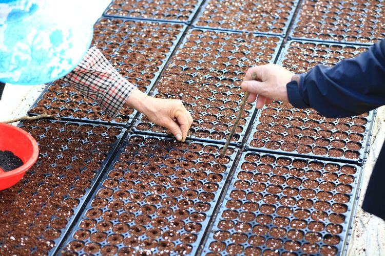 Cropped Hands Of Farmers Planting Seeds In Containers