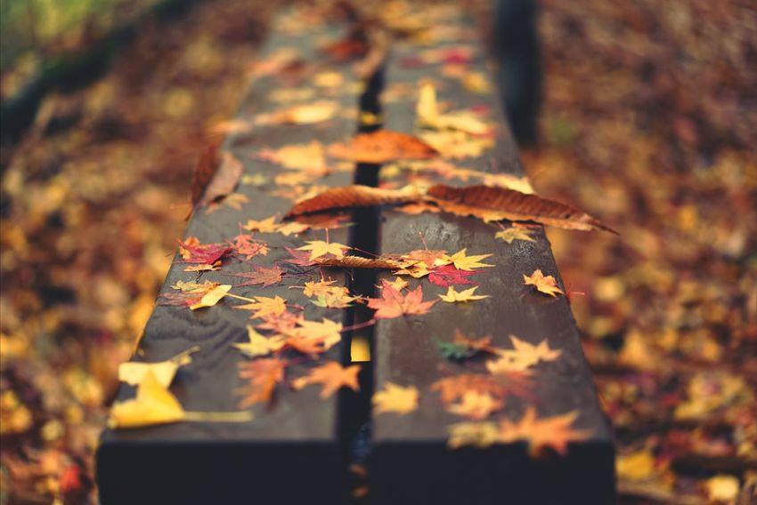Korea Photos Autumn Fall Autumn Colors Silhouette Treepark Light And Shadow Fall Beauty 43 Golden Moments
