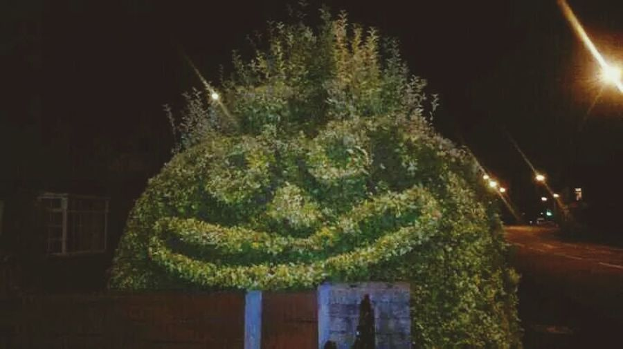 Streetphotography Bushes Faces In Places Urban Manchester UrbanART Hedgerow Hedge Happystreet