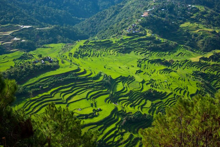 Aerial view of terraced rice fields