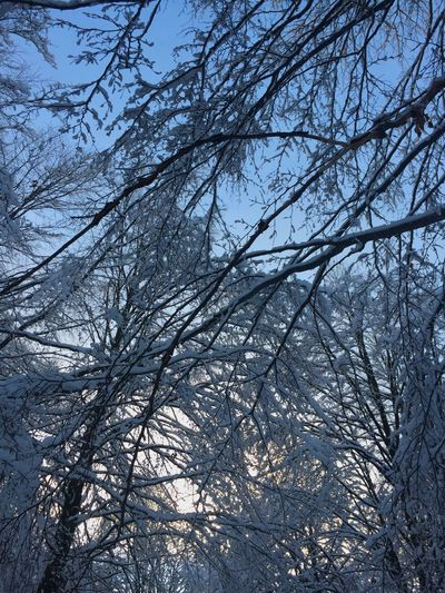 Tree Branch Low Angle View Plant Tranquility Nature No People Beauty In Nature Snow Cold Temperature Outdoors Winter White Color