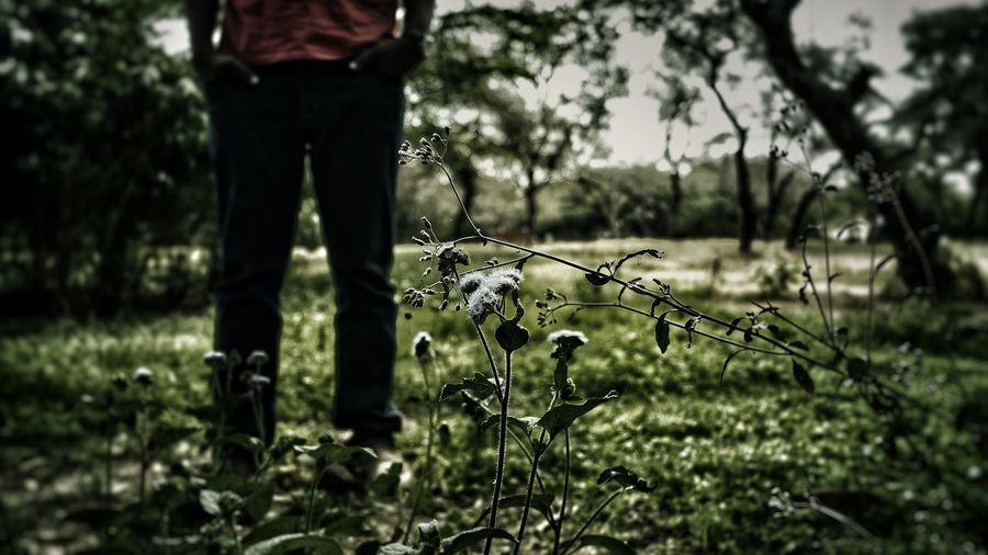 DRAMA LESS STAND Alone Drama NewAngle People Photography Click Ramdomclick View India Human Visual Creativity Tree Close-up Sky Grass Growing Blooming Stem Petal Flower Head Bud Young Plant Plant Life