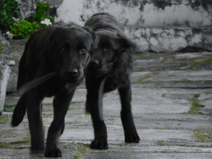 Dog Racing EyeEm Best Edits Animal Lover😍😍😍 Animal Lover Animalsofinstagram Dog Walking Dog Lover Dogs Of EyeEm Dog❤