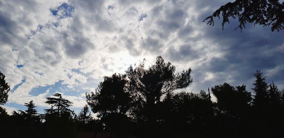 il cielo della slovenia Cielo E Nuvole Natura Slovenia Ankaran Cielo Nuvole Nubi Alberi