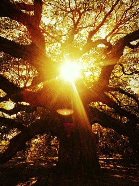 Sunshine TreePorn
