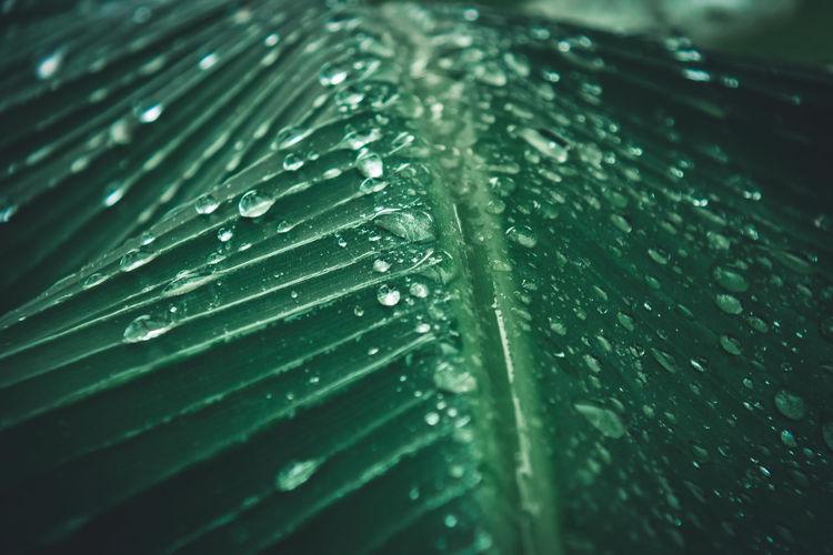 Full frame shot of raindrops on leaves