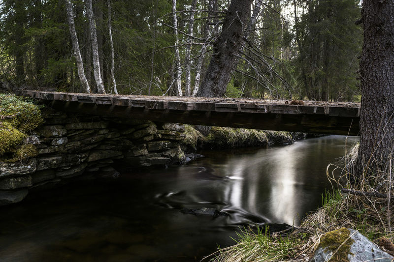 Bridge over river in forest