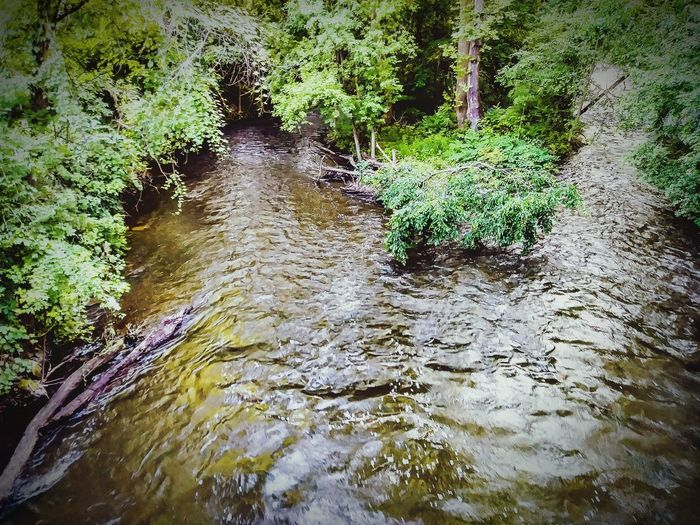Outdoors Creek Mosquito Creek