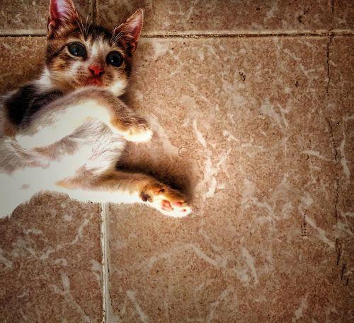 The Week On EyeEm Pet Portraits