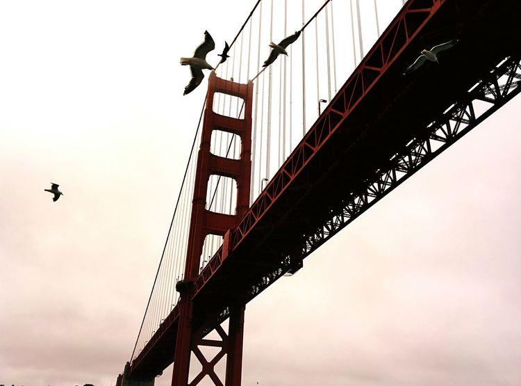 Bridge Golden Gate Bridge Birds