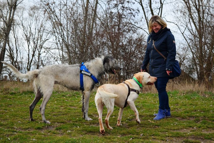 Domestic Animals Leisure Activity One Person Real People March 2017 Winter 2017 A Walk In The Park How Is The Weather Today? Labrador Cearnaigh Irish Wolfhound Dog Of The Day Dogs Of Winter Dogs Of EyeEm Dogslife Animal Themes Portrait Friendship Dogwalk People Photography Togetherness