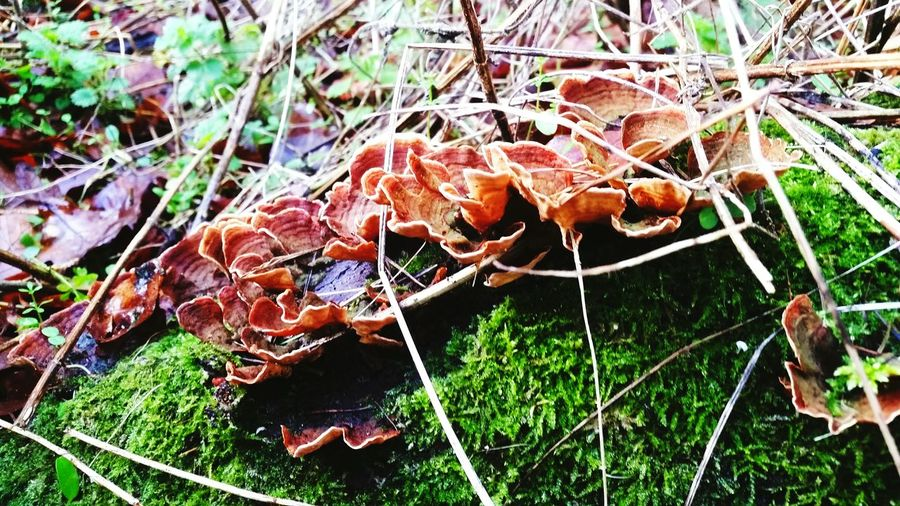 Growth in the strangest places. Mushrooms Logs Fallen Leaves Inside Things Differnet Setting Low Angle View Nature_collection Tree Fungi Beauty Of Decay