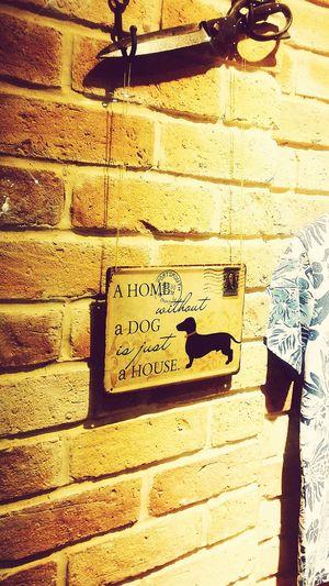 Pet Dog Pet Lover Boutique,fashionblogger,grafiti,graphic,graphicdesign,illustration,leopardprint,littleblackdrs,markers,model,monochrome,myart,onlinear,onlineart,onlineartgallery Teheran Envelope