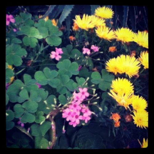 August2 Flower (: