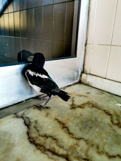 High angle view of bird perching on window in building