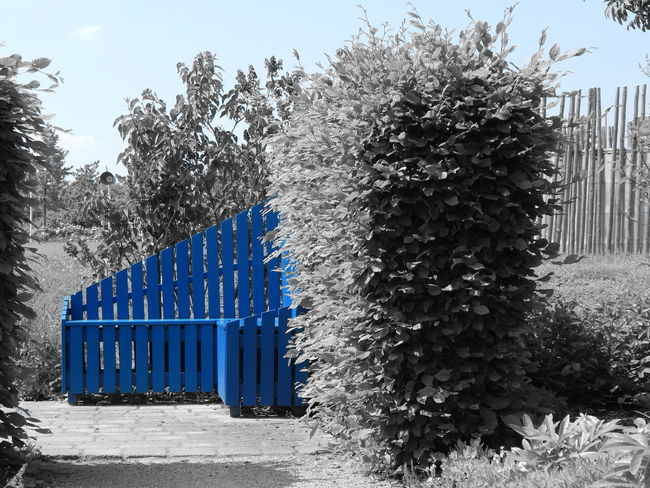 a bench in a park in Leverkusen Art ArtWork Bench Black & White Black And White Blackandwhite Blackandwhite Photography Blue Blue Art Blue Bench Blue Remains Bush Creative Creative Light And Shadow Color Photography Creative Photography Creative Shots CreativePhotographer Creativity Empty Garden No People One Color One Color Remains Outdoors Tranquility