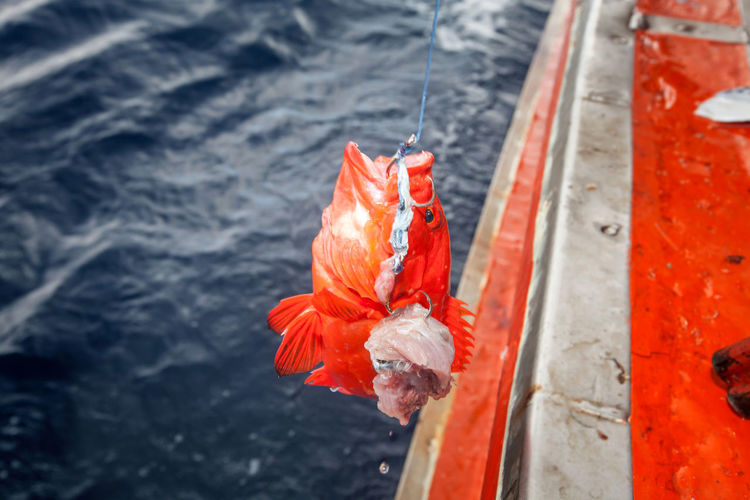 Close-up of orange fishing hook