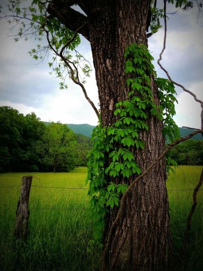 Taking Photos Cades Cove Eye Em Nature Lover Great Smoky Mountains  EyeEm Best Shots Beautiful Nature
