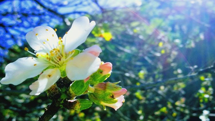 Flower Nature Fragility Beauty In Nature Blossom Growth Freshness