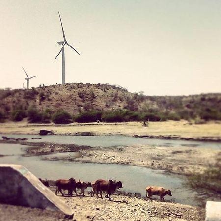 Windmills Cows Pond Village Sky Smallhills Traveling Photography Instaedit Instaclik Instagram Pys