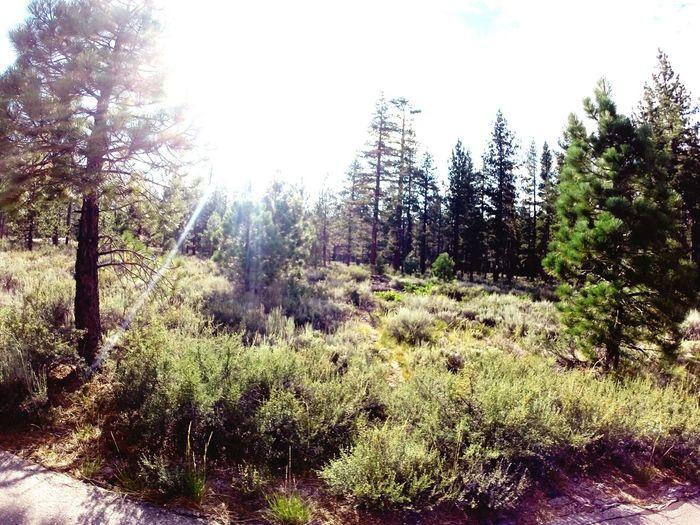 Nature Lake Tahoe