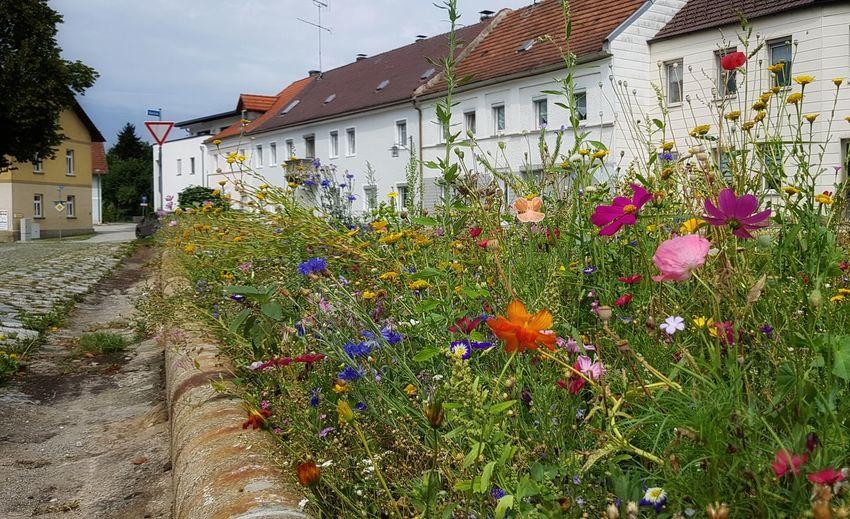 Street Bavarian