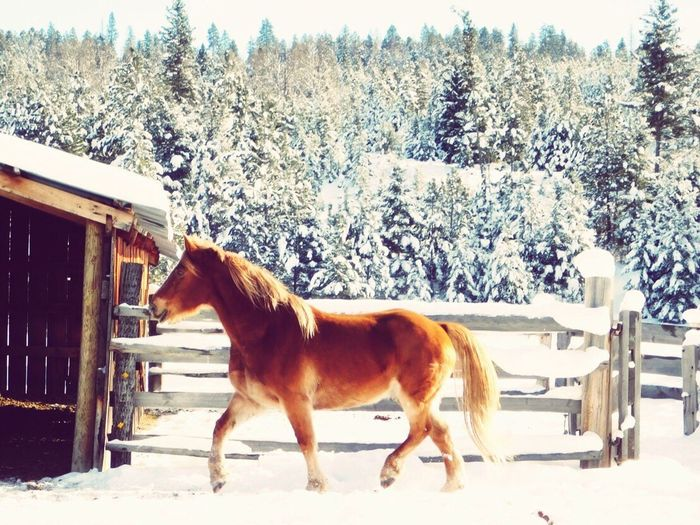 Horse standing in front of snow