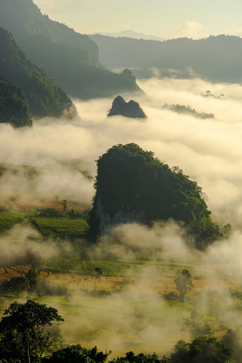 Scenic View Of Fog Covered Forest By Mountains Against Sky