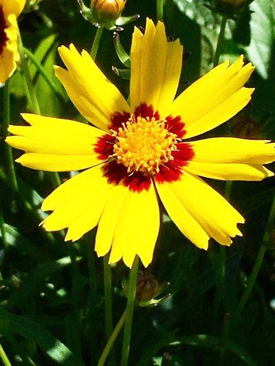 Flowers Flower Flowering Plant Plant Yellow Vulnerability  Fragility Flower Head Nature