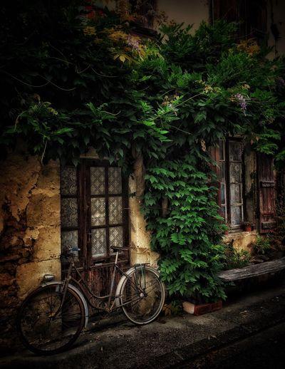 EyeEm Selects Bicycle Door Plant Window