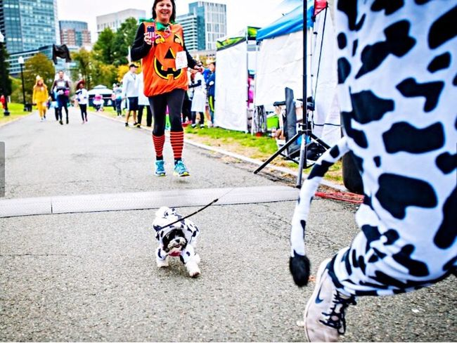 Crushed the Boston Costume Dash with record time in the puppy category 🥇🐼🥇