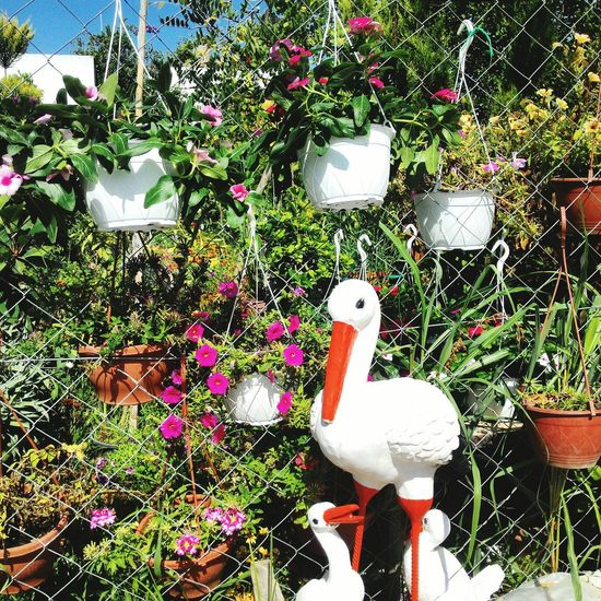 Relaxing Taking Photos Hi! That's Me Check This Out Enjoying Life MyGarden MyLife MyPeacefulPlace Hanging Out Hello World Fethiye EyeEm Freedom Turkey