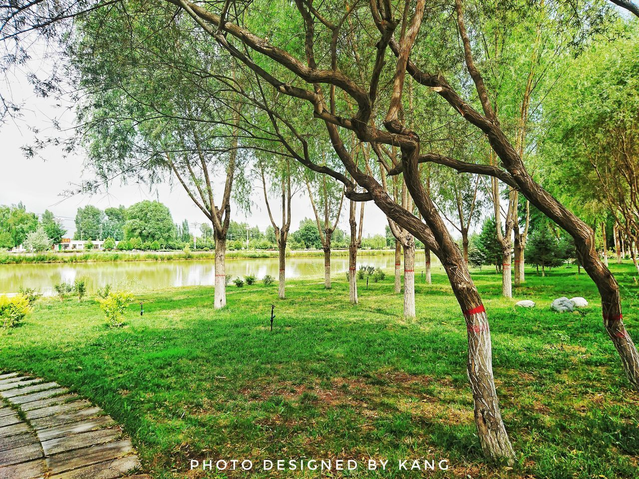 tree, tree trunk, growth, grass, green color, nature, beauty in nature, tranquility, tranquil scene, branch, outdoors, day, scenics, no people, landscape, park - man made space, bare tree, water, sky