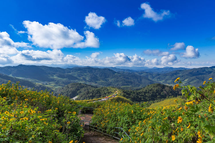 Tung Bua Tong Mexican sunflower in Maehongson, Thailand ASIA Background Beautiful Blue Bua Chong Dok Flower Green Hill Hong Jong Khắm Klang Landscape Light Mãe Maehongson Mexican Natural Nature Nobody North Outdoor Place Road Sky Son Summer Sunflower Temple Thai Thailand Tong Travel Tung Wat White Winter Yellow Scenics - Nature No People Plant Outdoors Environment Land Beauty In Nature