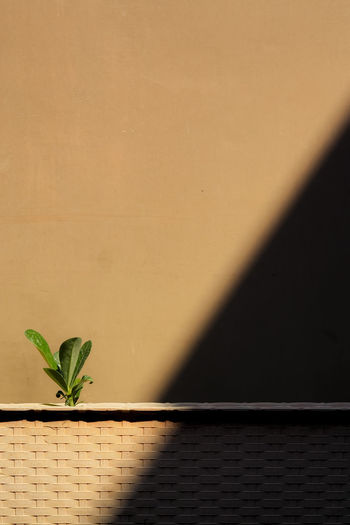 Close-up of plant against  brown wall