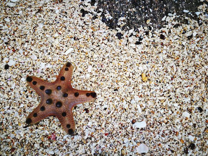 STARFISH Stones Seashore Starfish At Beach Starfish  Whitesand Vacations Nature EyeEmBestPics Close-up EyeEmSelect Beachphotography EyeEmNewHere HuaweiMate9Photography EyeEm Gallery Outdoors Beach Beauty Beauty In Nature EyeEm Best Shots Portrait Mobilephotography Nature Sand StarfishBeSoCute The Still Life Photographer - 2018 EyeEm Awards