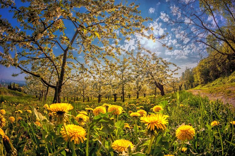 Plant Growth Beauty In Nature Yellow Flower Flowering Plant Tree Nature Sky No People Blossom Day