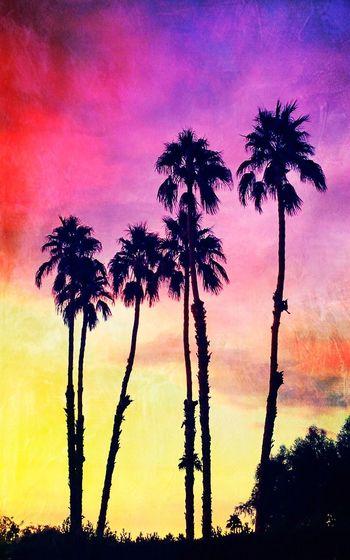 Desert Sky v2... Sunset Silhouettes Palm Desert, CA Sunsetporn Beauty In Nature Silhouette Dramatic Sky Beauty In Nature