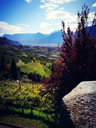 MeranerLand Homesweethome ♥ Southtyrol  Beauty In Nature Tree Freshness Beautiful View Amazingcolours Autumn Colors Outdoors Mountain Range Beautifulweather HuaweiP9Photography Notprofessional Blue Sky Cloudy Sky